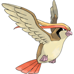 A Pidgeot may attract the interest of both social groups